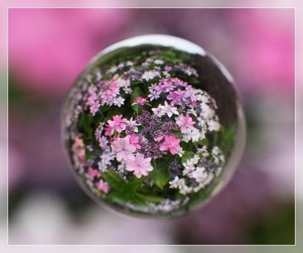 IMG_164000夢の花園.JPG